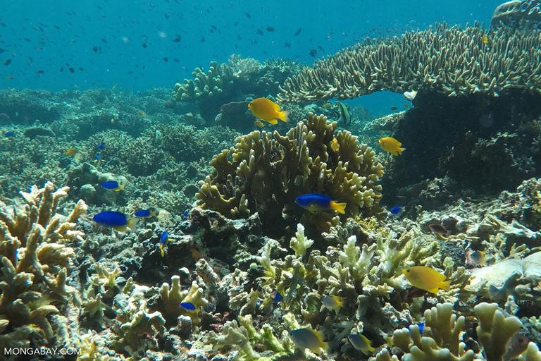 Komodo's coralscape
