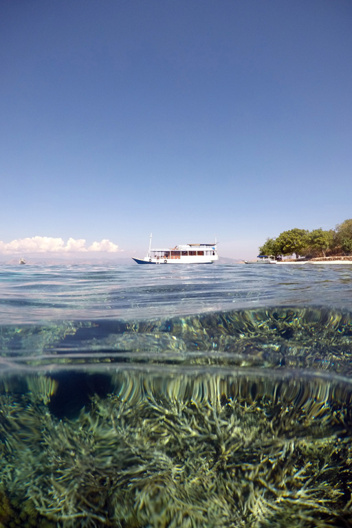 Above and below the surface on Komodo's coral reef