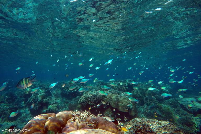 Coral fish in Komodo