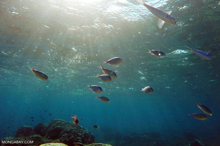 Coral reef fish in Komodo