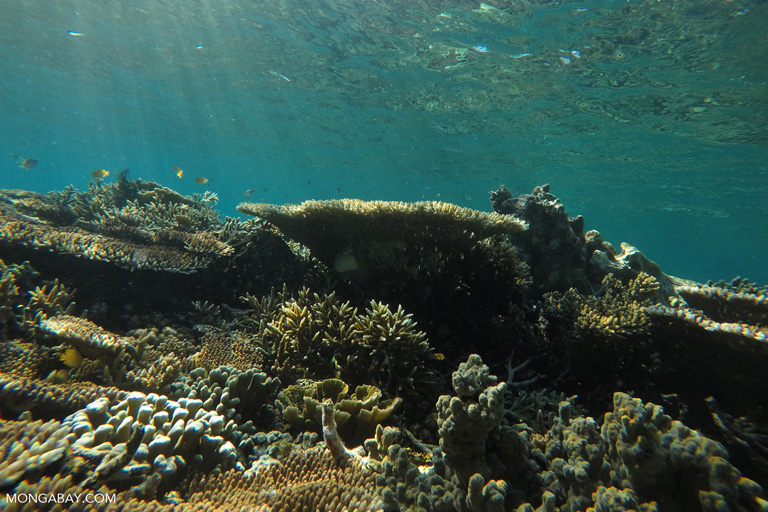 Coral reef fish in Komodo