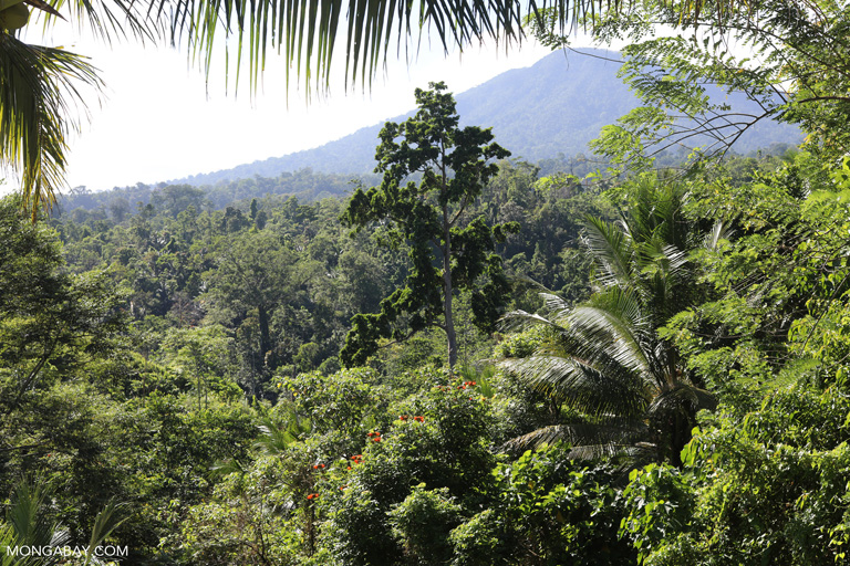 Forest and coconut plantation in North Sulawesi