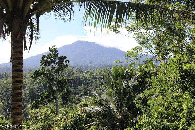 Mountain in Tangkoko