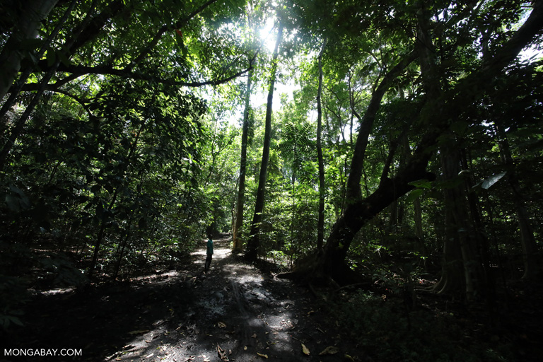Trail in Sulawesi's rainforest