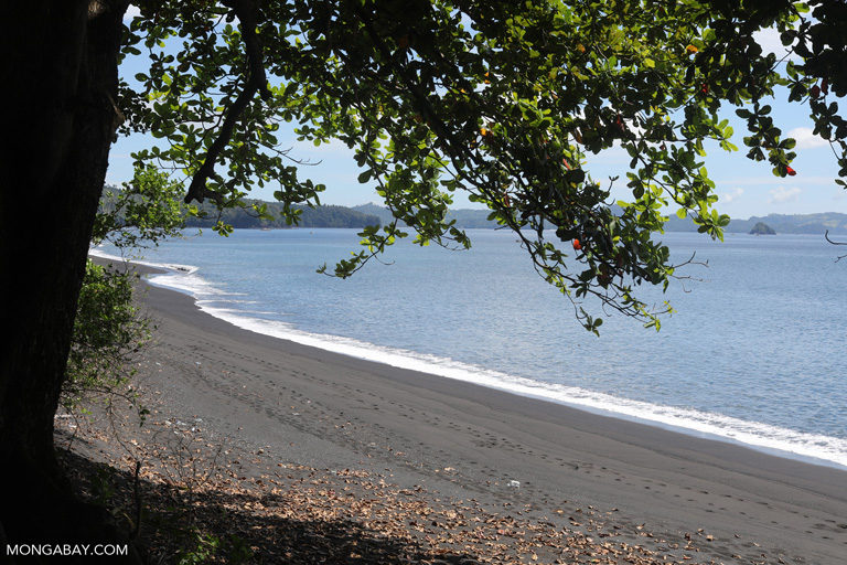 Black sand beach in Tangkoko