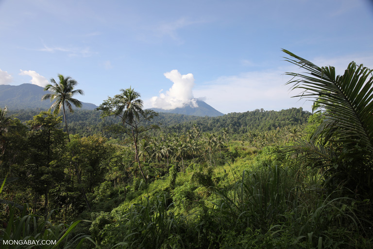 Coconut plantation aside forest below Dua Saudara Mountain