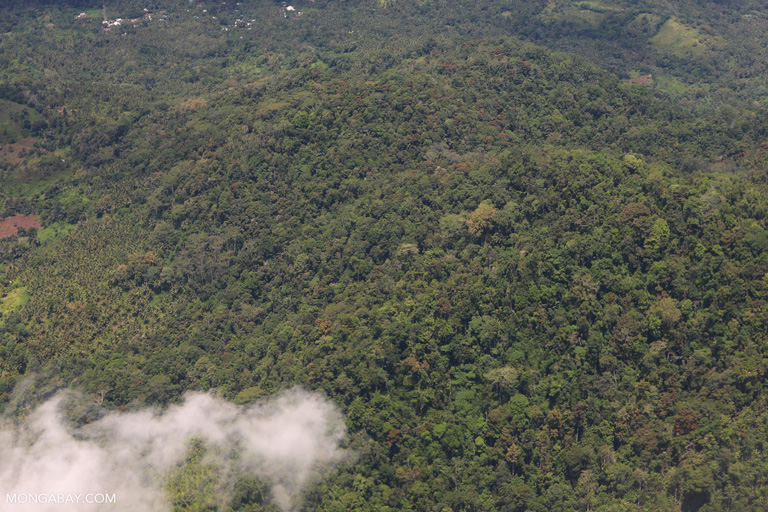Aerial photo of rainforest in North Sulawesi