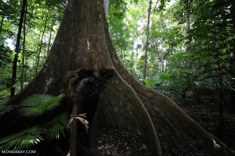 Indonesian rainforest