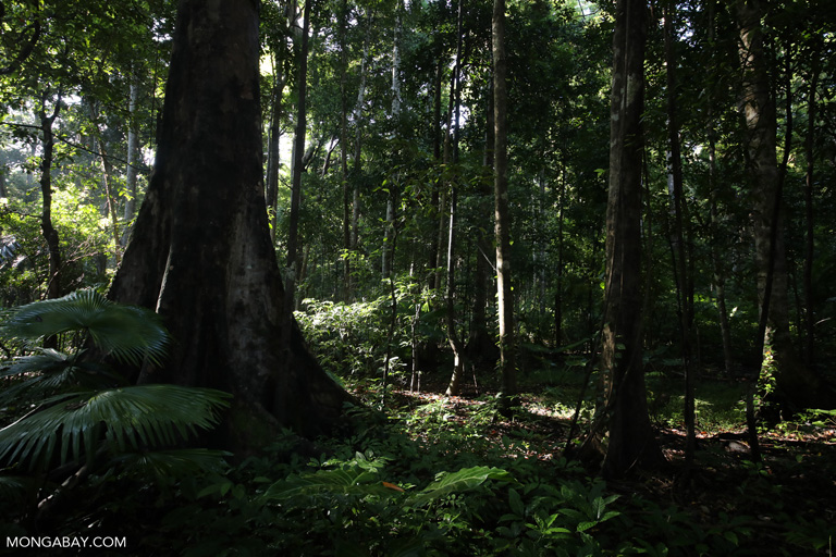 Sulawesi rainforest