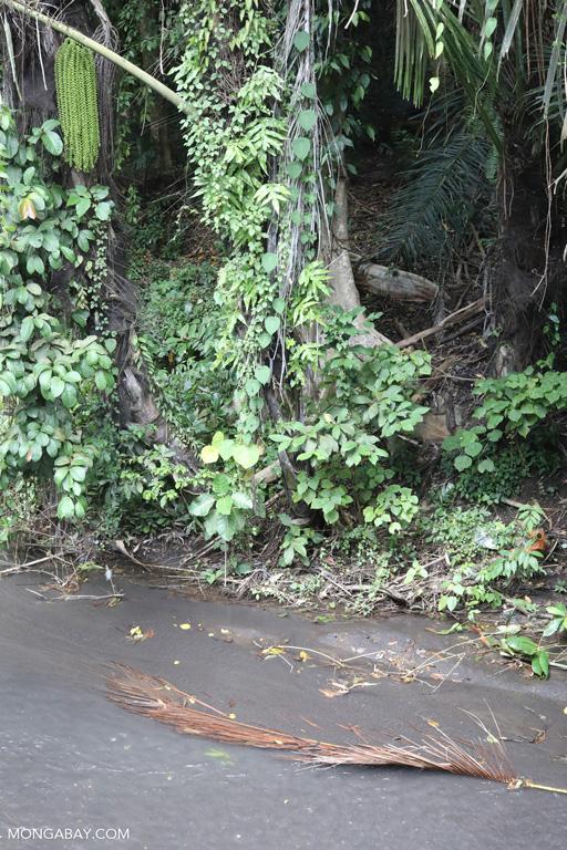 Creek on the border of Tangkoko National Park