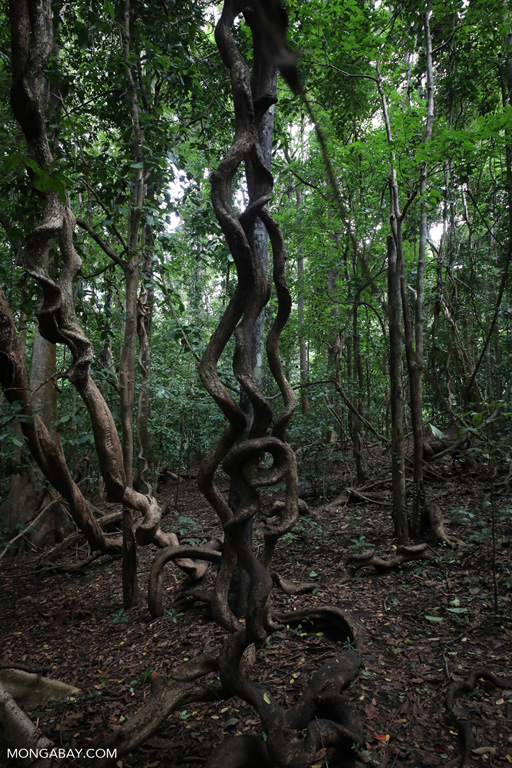Vines and lianas
