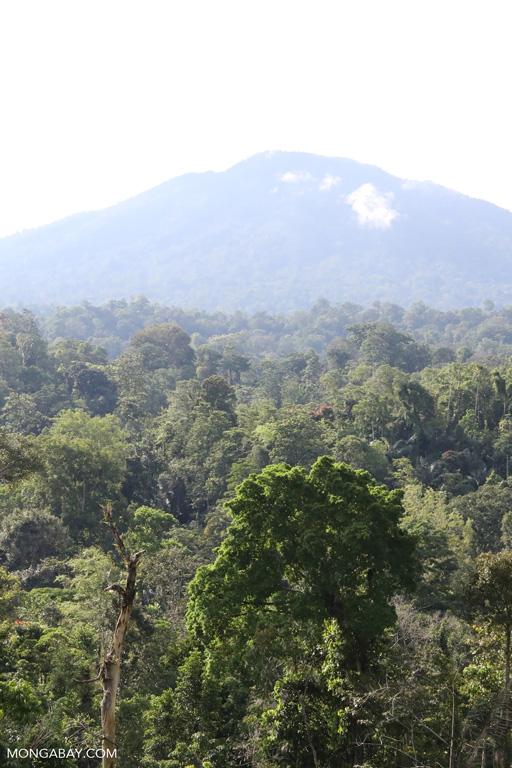 Rainforest below Dua Saudara