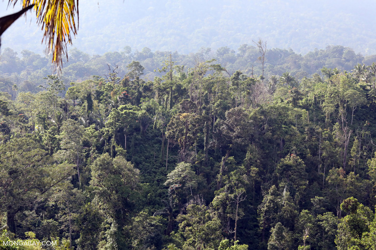 Rainforest below Dua Saudara