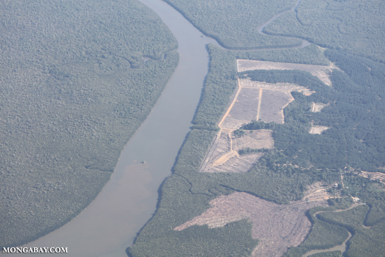 Palm oil plantation next to mangrove forest in Borneo