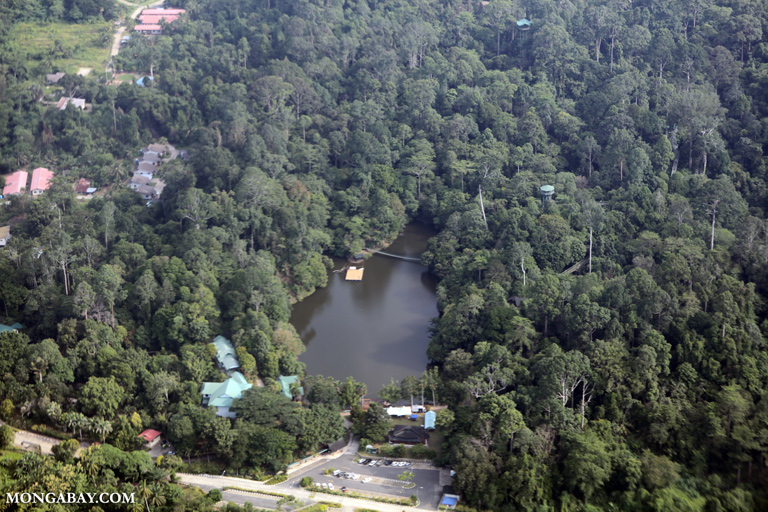 Aerial view of the Rainforest Discovery Center (RDC)
