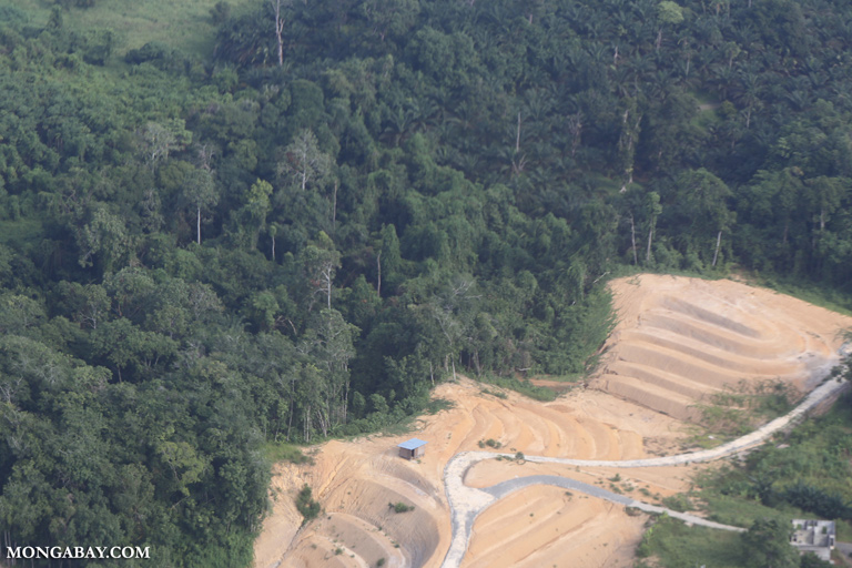 Forest clearing in Sabah