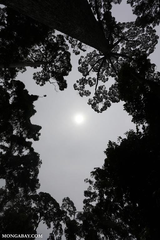 Sun shining through haze in Borneo
