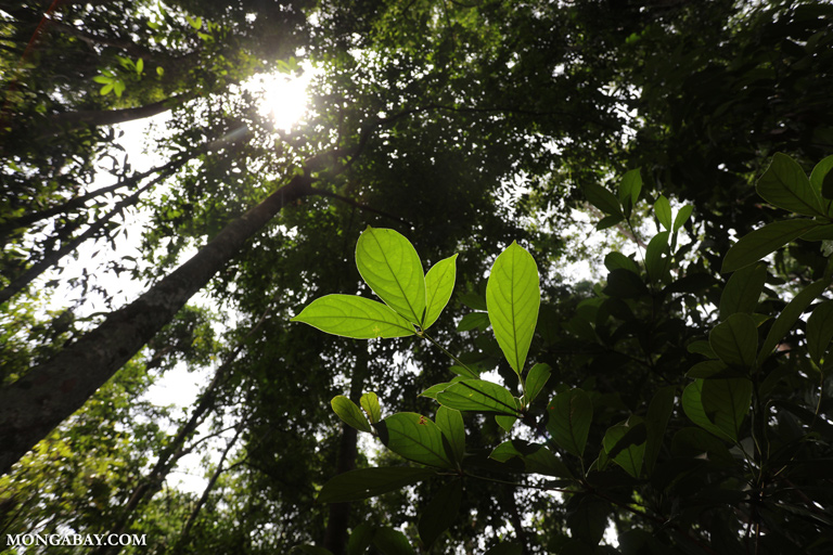 Rainforest understory
