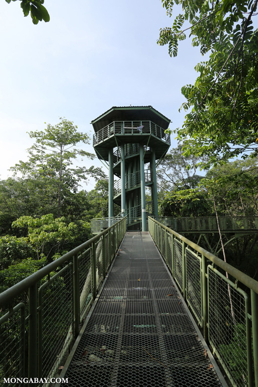 Canopy tower at the RDC