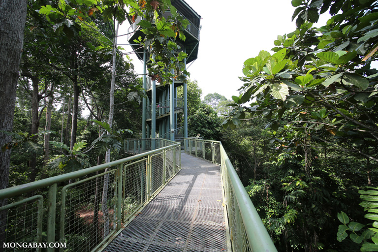 Canopy walkway at the RDC
