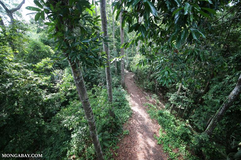 Rainforest trail in RDC