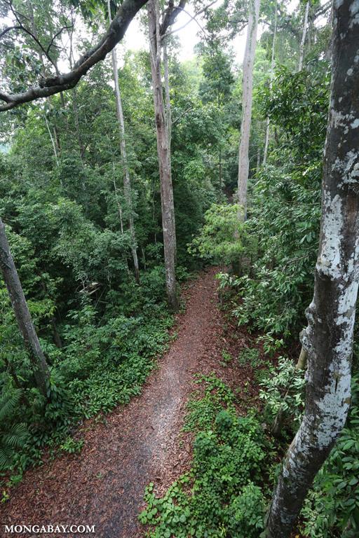 Trail in Borneo's rainforest