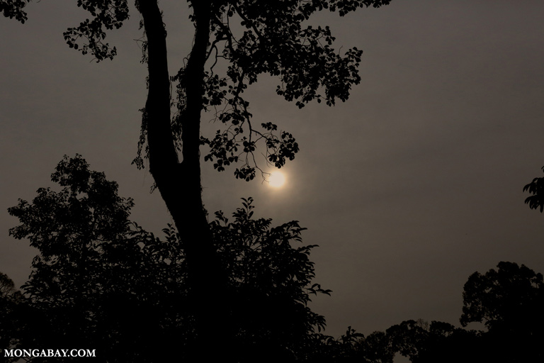 Sun seen through haze from fires in Borneo