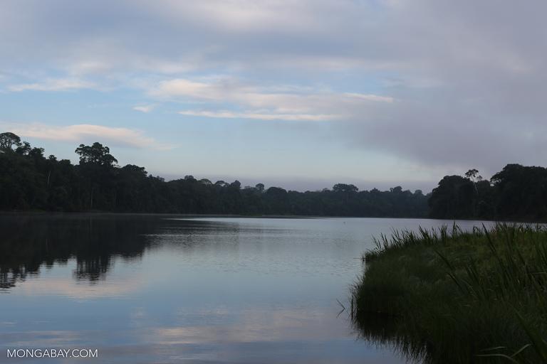Oxbow Lake in the Amazon