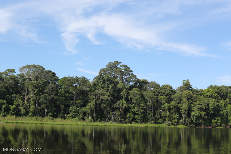 Rainforest around an oxbow lake in the Amazon