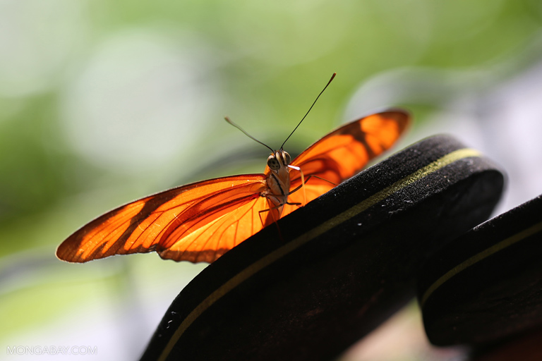 Orange butterfly on flip flops