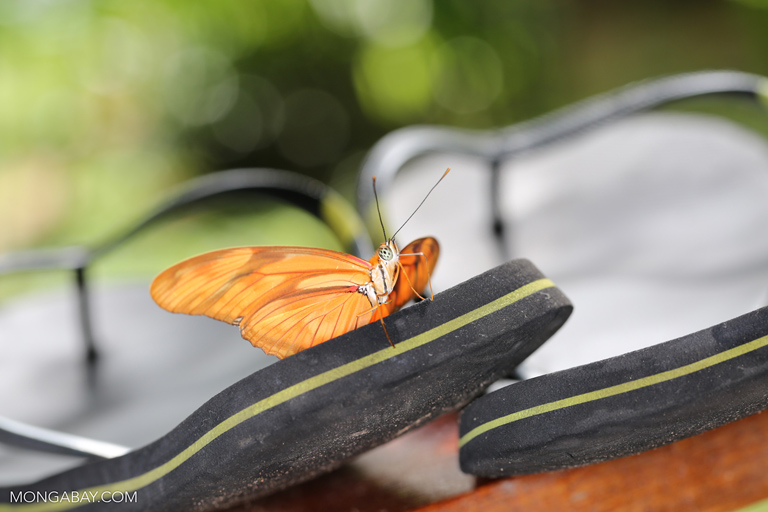 Orange butterfly on flip flops