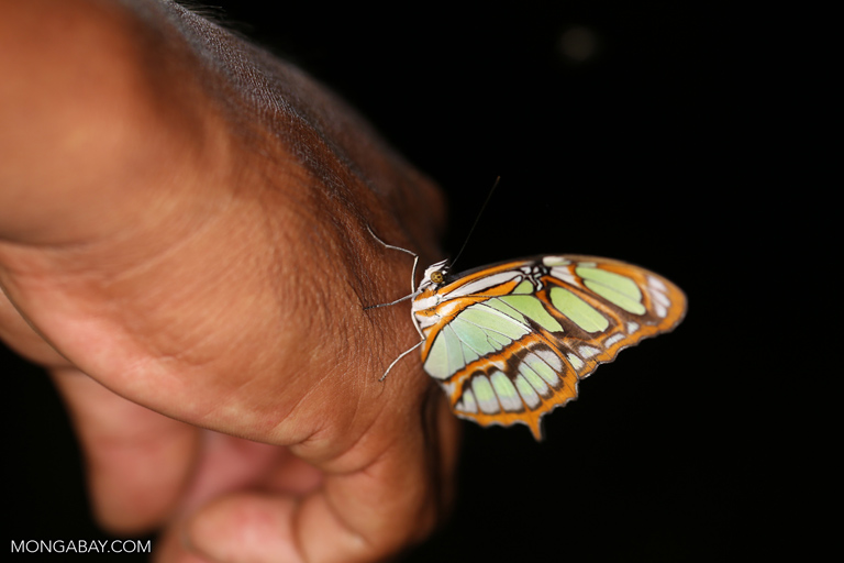 Butterfly on a man's hand