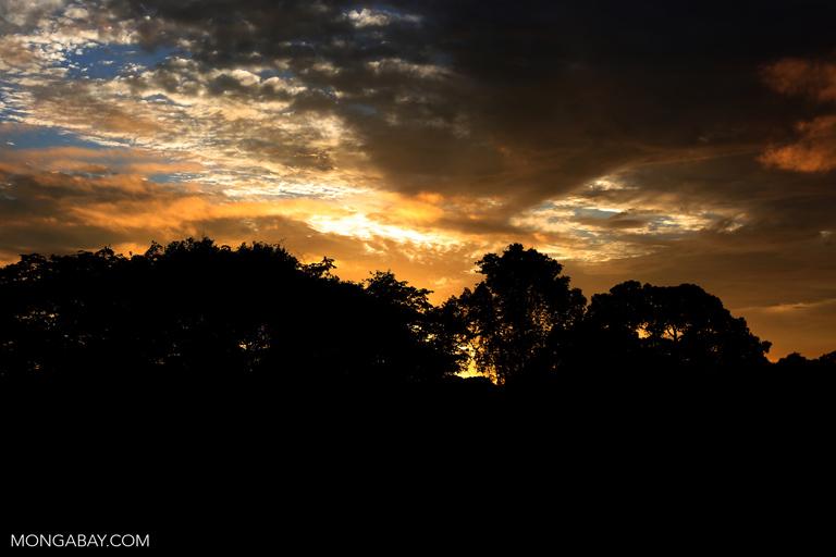 Sunset over the rainforest canopy