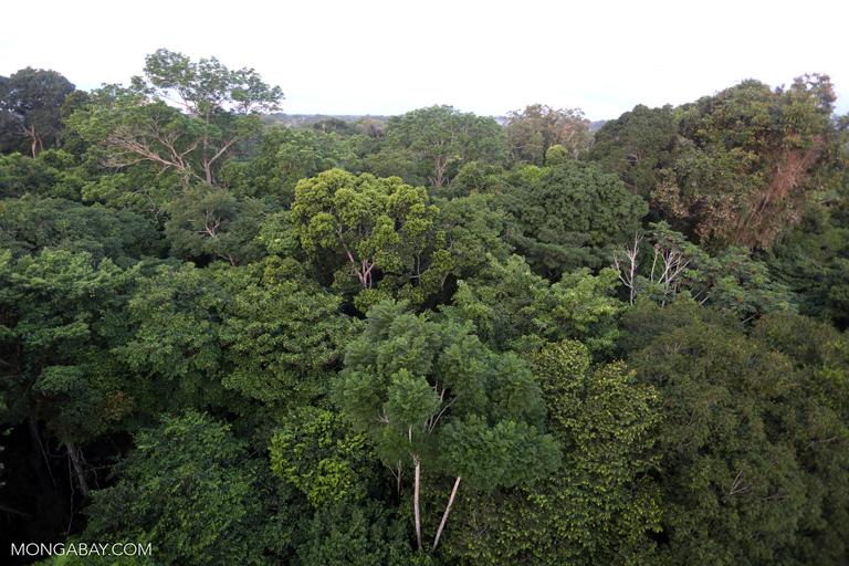 Rainforest canopy in Peru
