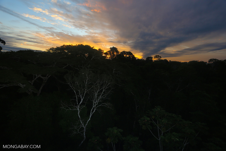 Sunset over the rainforest canopy