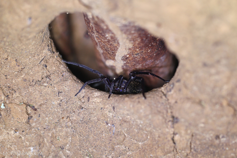 Spider in a tree hollow