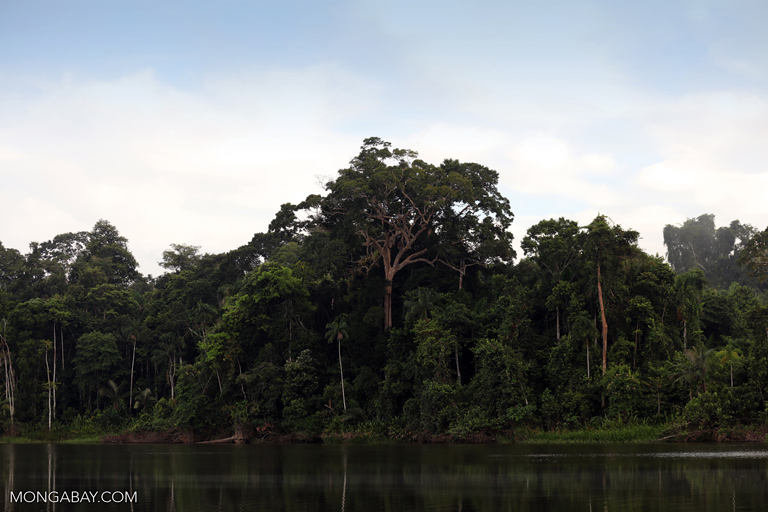 Trees along an oxbow lake