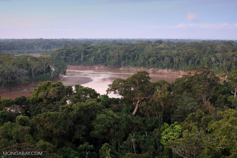 Rainforest on the Tambopata River, southeastern Peru.