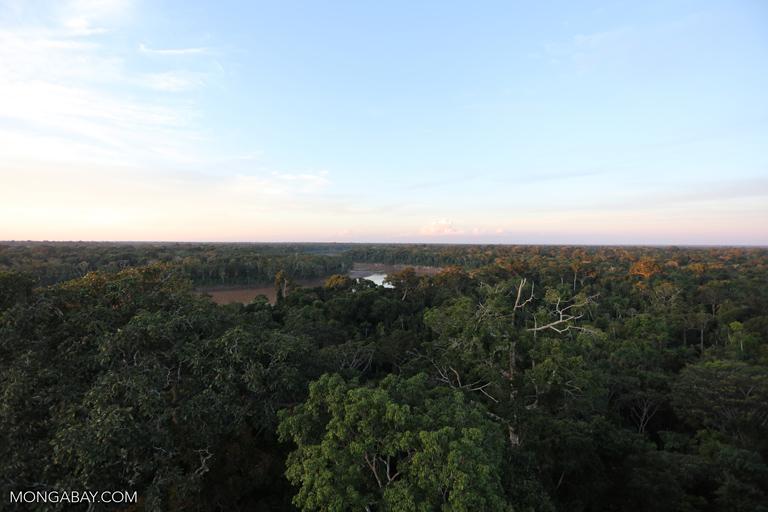Amazon rainforest canopy