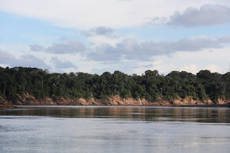 Rainforest along the Tambopata  river