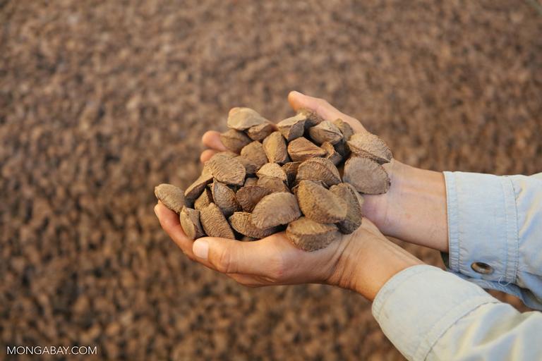 Handful of raw Brazil nuts