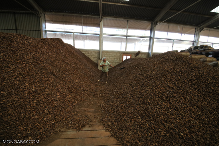 Piles of Brazil nuts