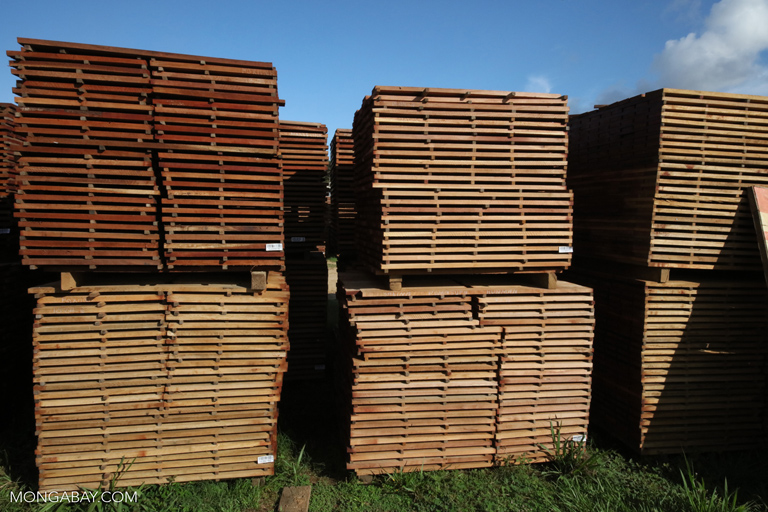 Piles of cut rainforest timber