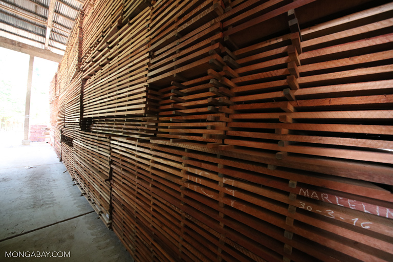 Rainforest plywood at Forestal Otorongo