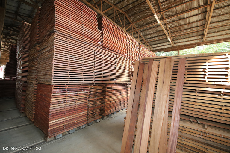 Rainforest plywood at Forestal Otorongo