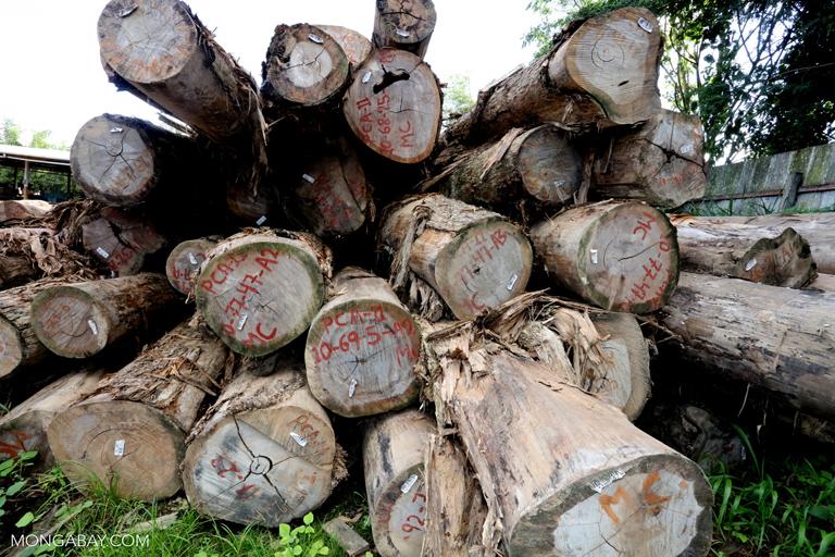 Piles of rainforest logs
