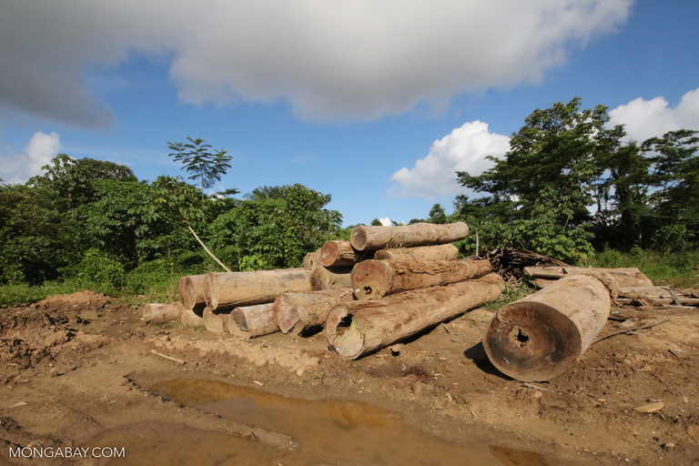 Piles of rainforest logs