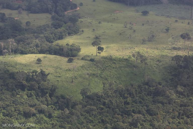 Deforestation for cattle pasture in Peru