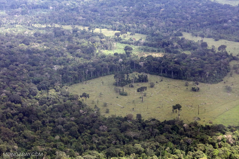 Deforestation for cattle pasture in Peru