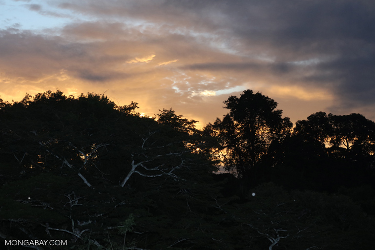 The Amazon rainforest at dusk